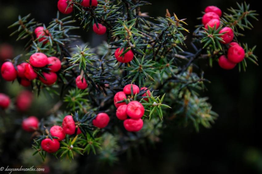 tasmania-flora2-