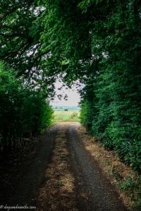 church lane-0271