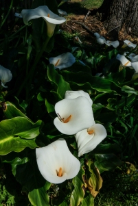 portarthurflora4-